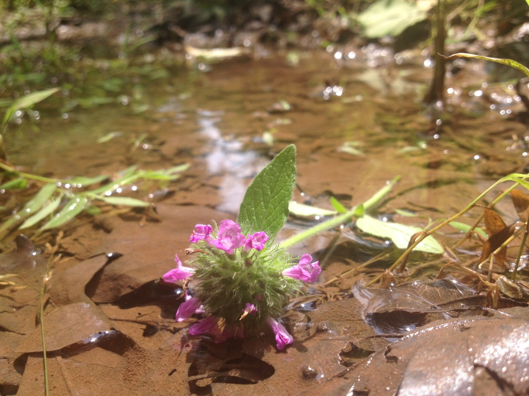 Flower in puddle